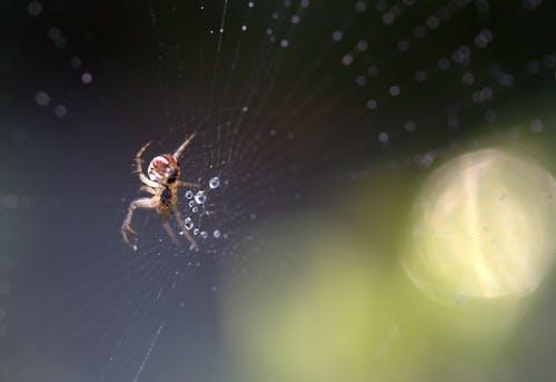 Základová fotografie zdarma na téma bezobratlí, divočina, hmyz, mokrý