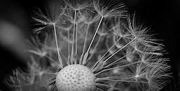 black-and-white, blur, flower