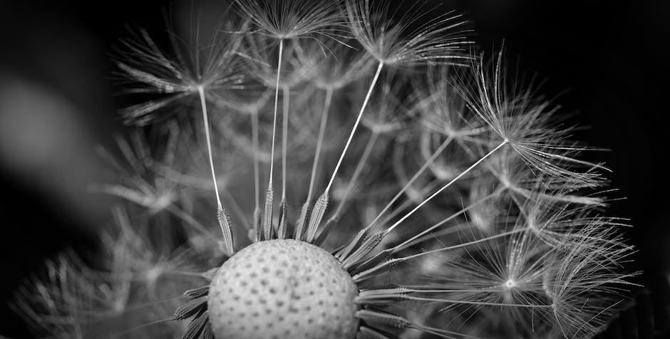 New free stock photo of black-and-white, blur, flower