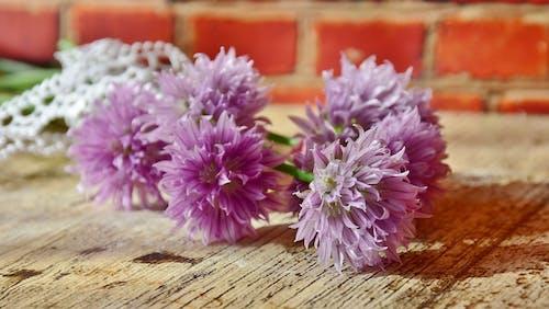 Darmowe zdjęcie z galerii z flora, kwiat, kwiaty, kwiaty szczypiorku