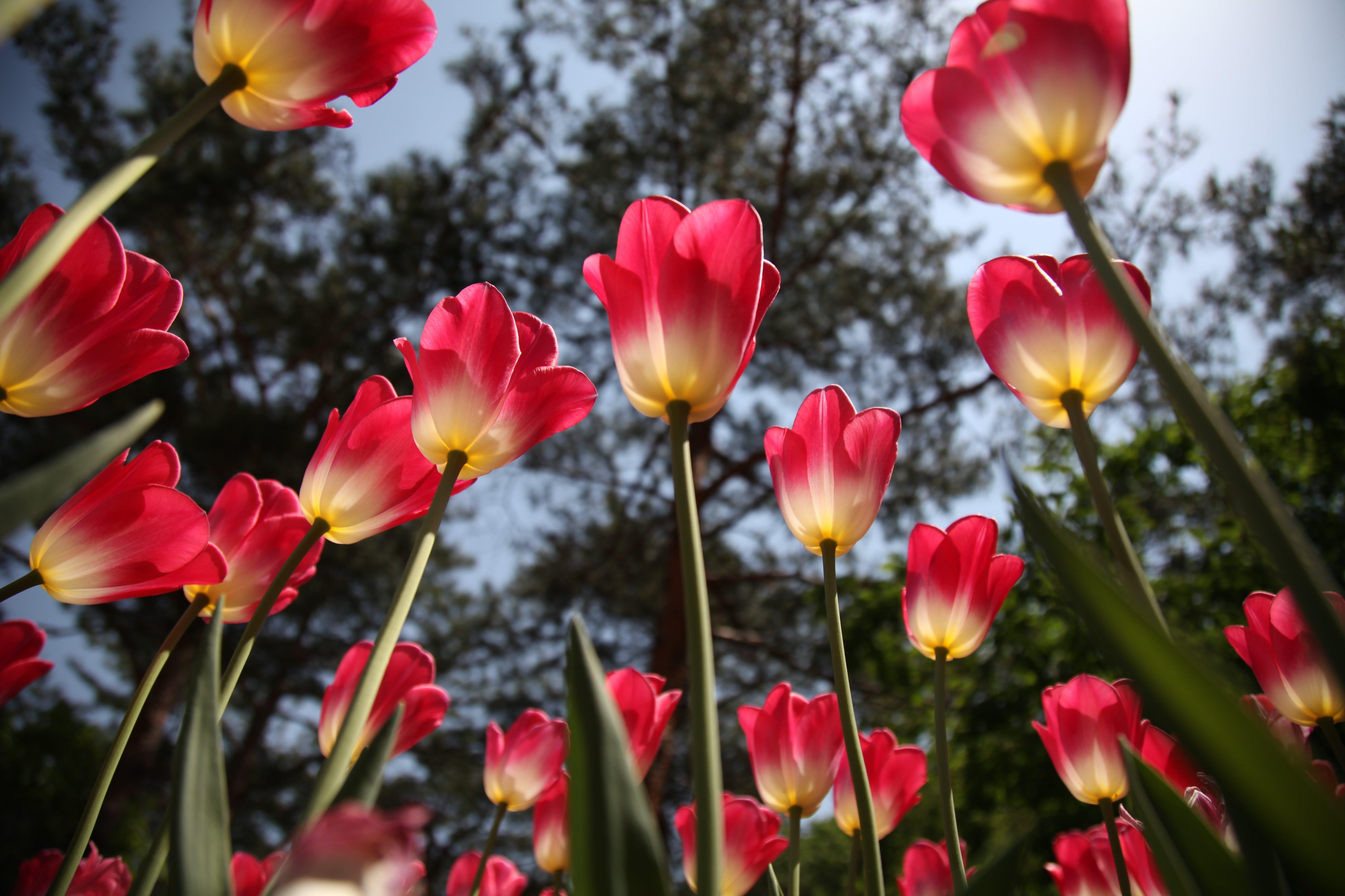 alan, bakış açısı, bitki örtüsü, bitkiler içeren Ücretsiz stok fotoğraf