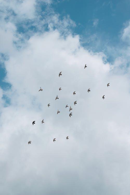 Ảnh lưu trữ miễn phí về bầu trời, bay, cao