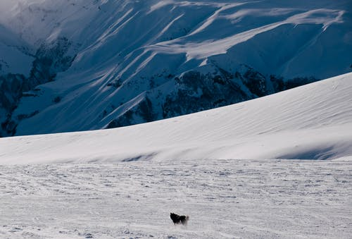 Black Animal on Snow Covered Mountain