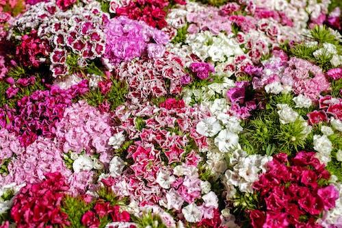 Kostenloses Stock Foto zu anordnung, blühen, blumen, blüte