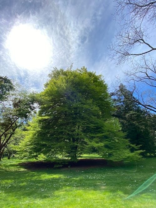 Free stock photo of stanleypark, tree, vancouver
