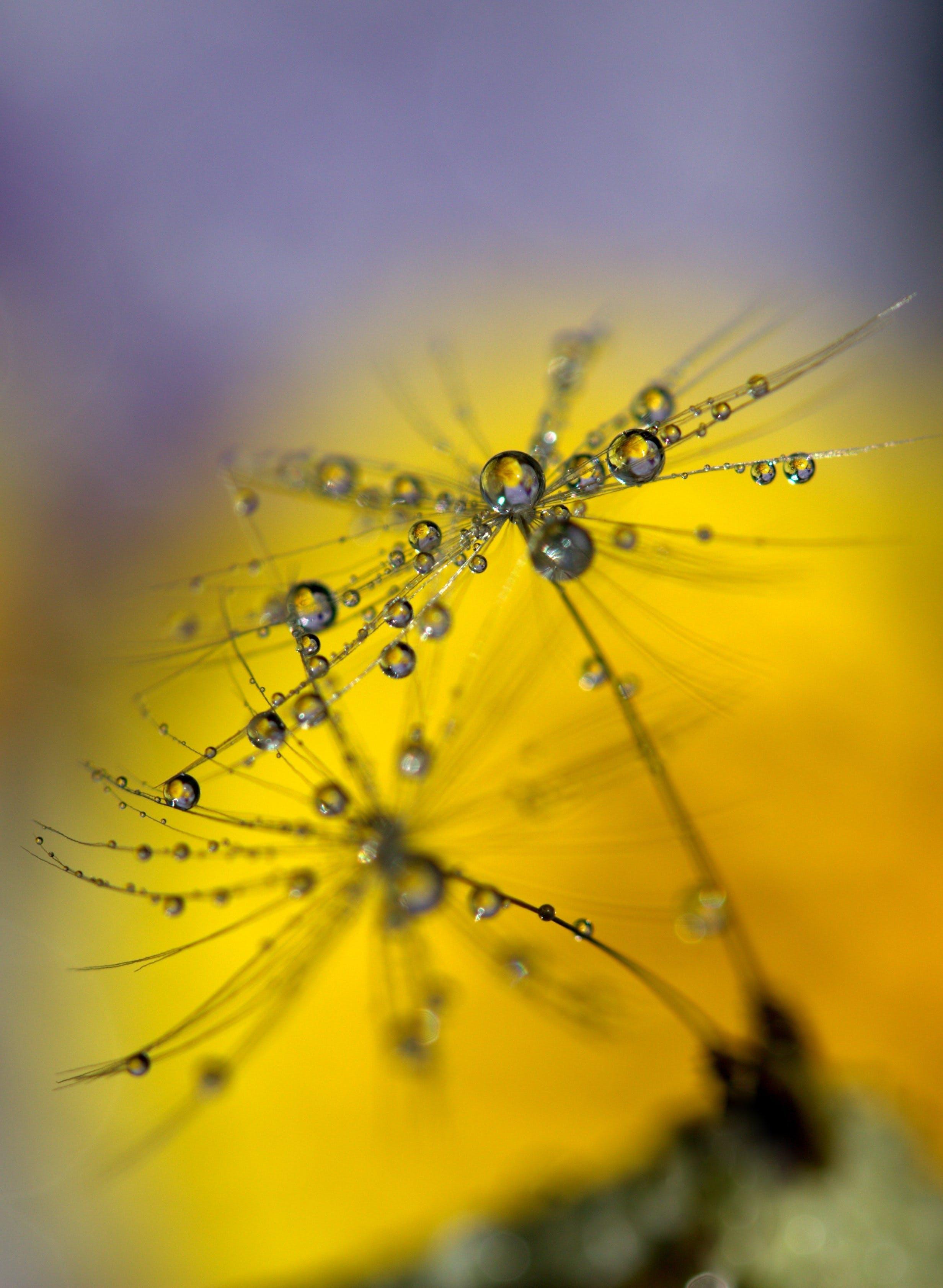 Water Droplets in Flowers