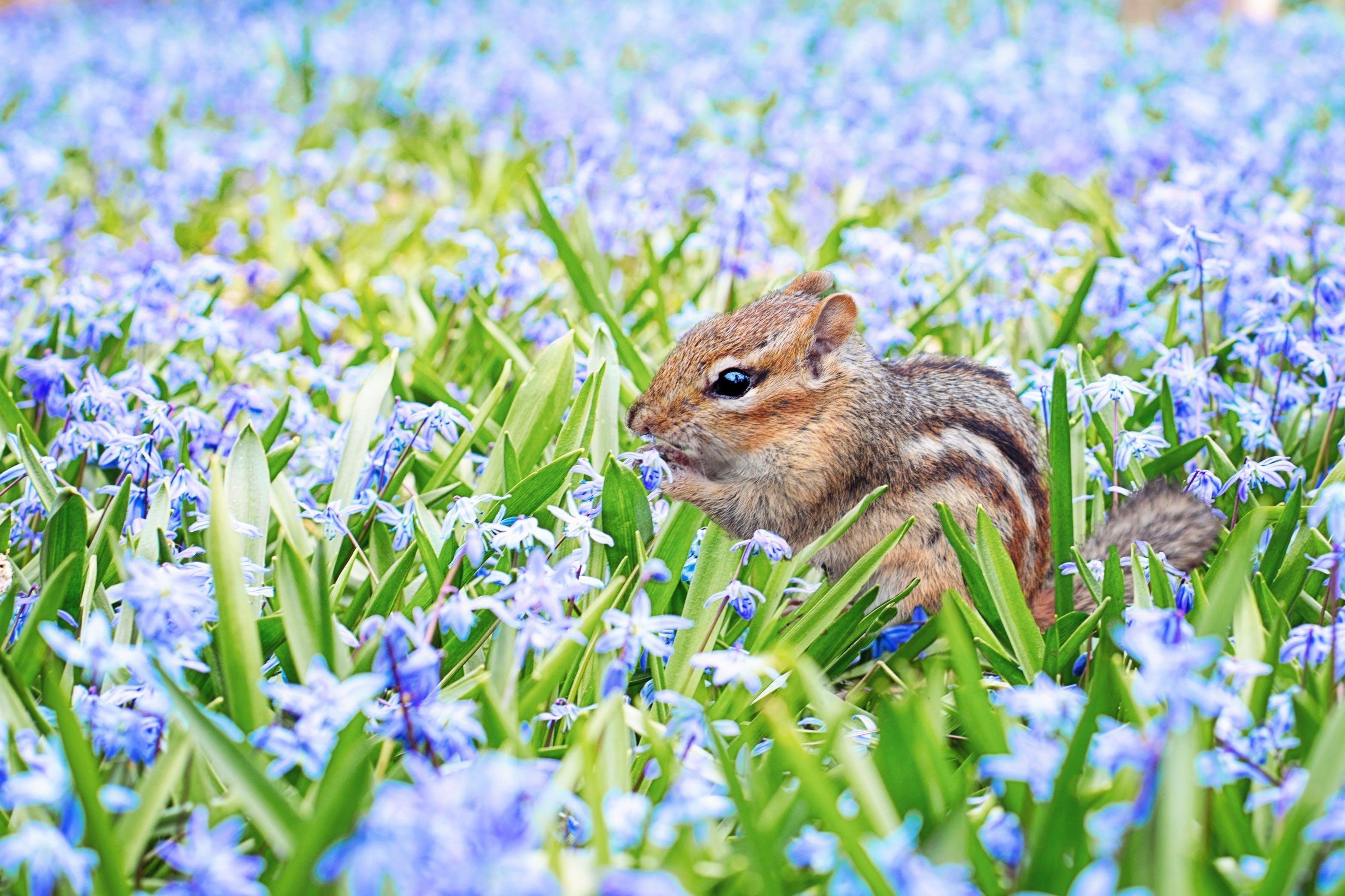 Free stock photo of adorable, animal, blue, chipmunk