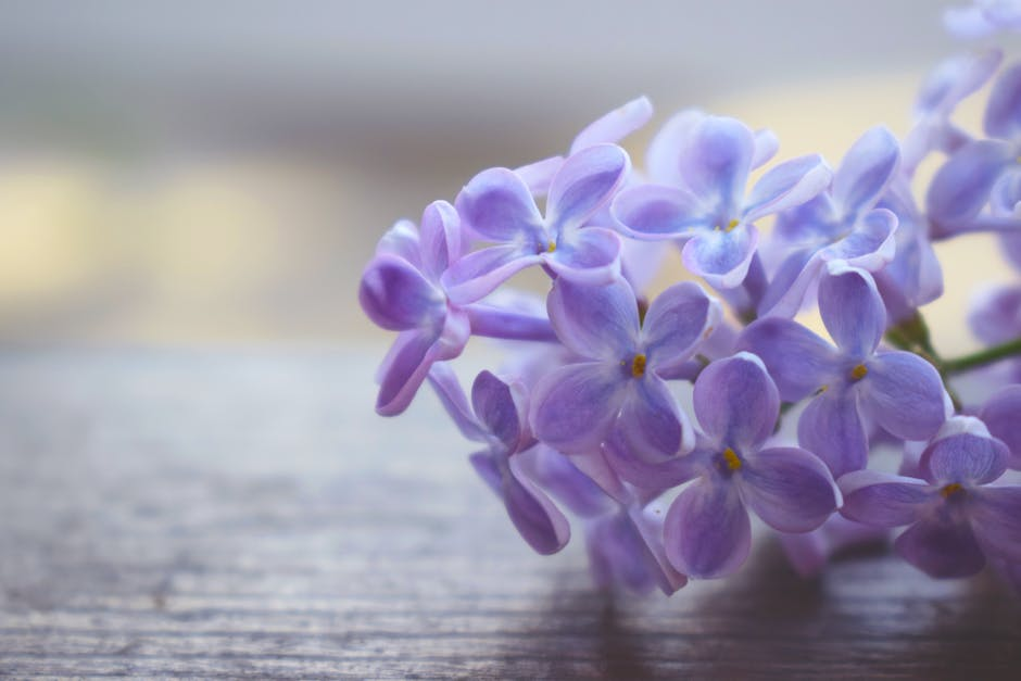 Shallow Focus Photography of Purple Petaled Flowers