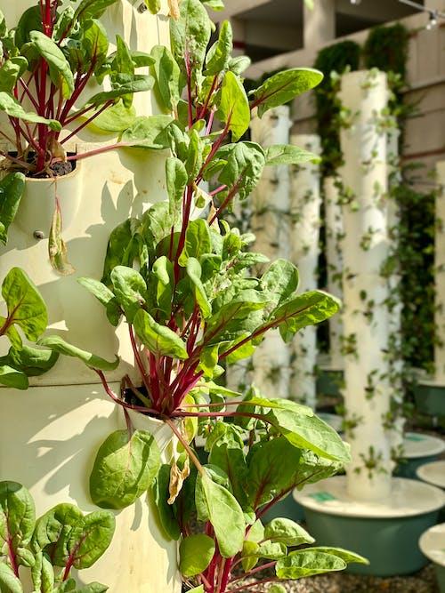 Free stock photo of aquatic plant, beautiful flower, cactus plants, climbing plant