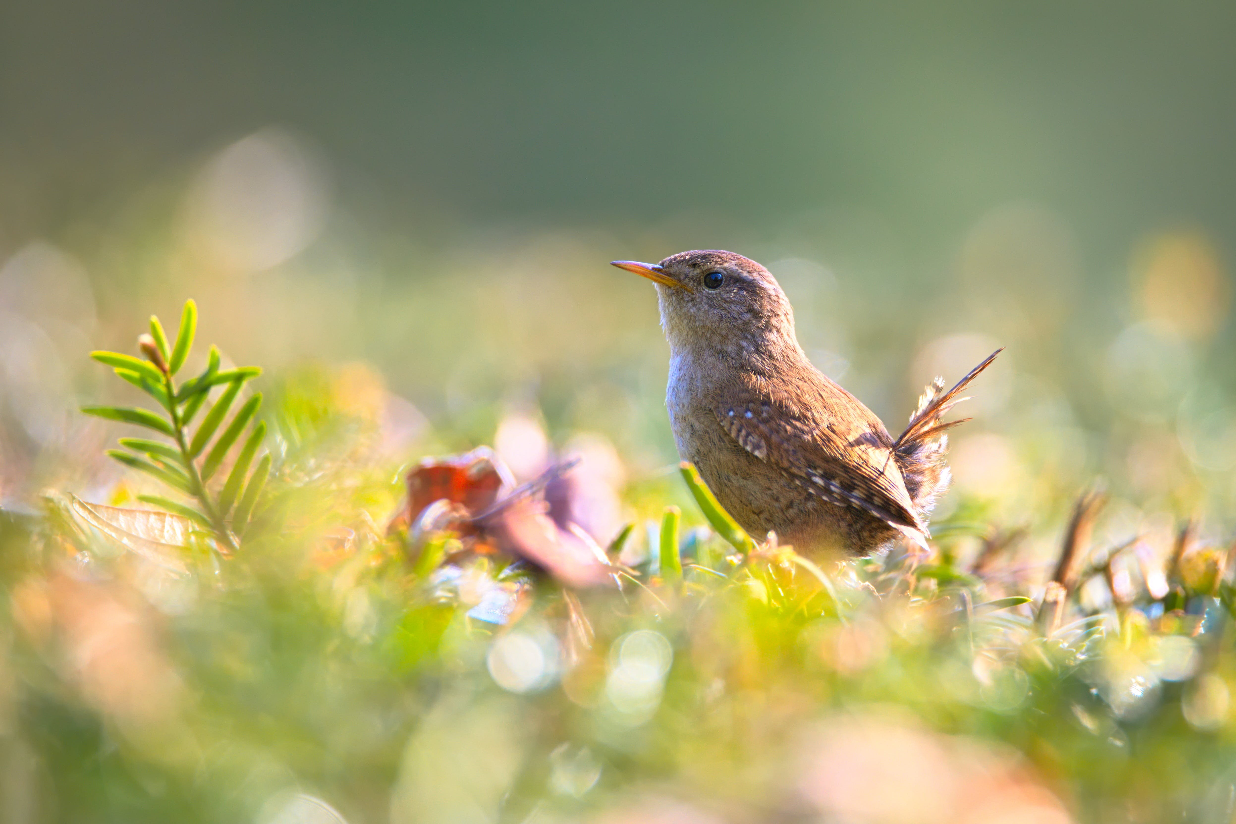 Brown Bird on Green Plant