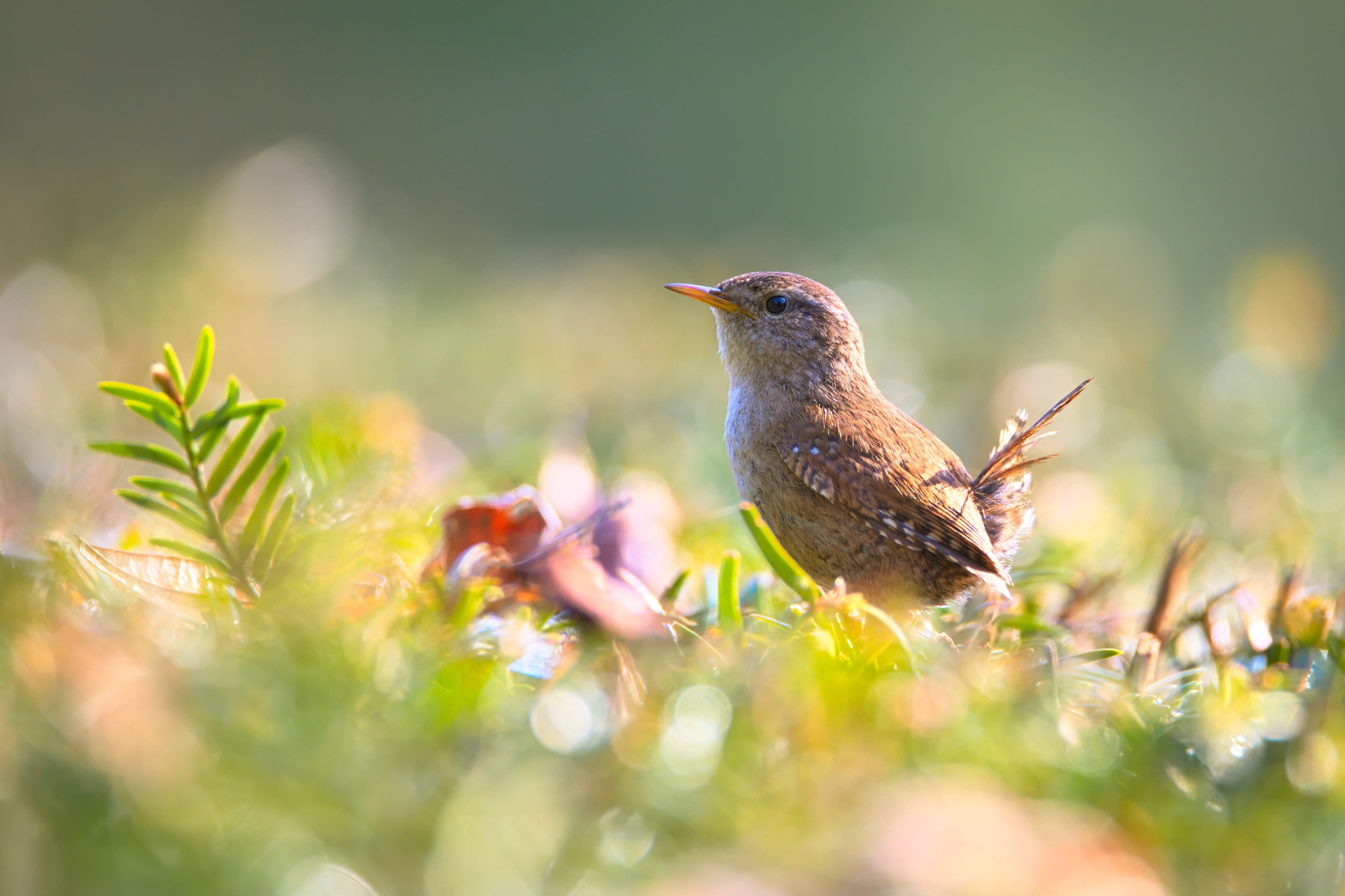 Brown Bird on Green Plant