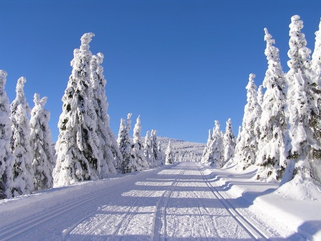 Free stock photo of mountains, winter, the giant mountains