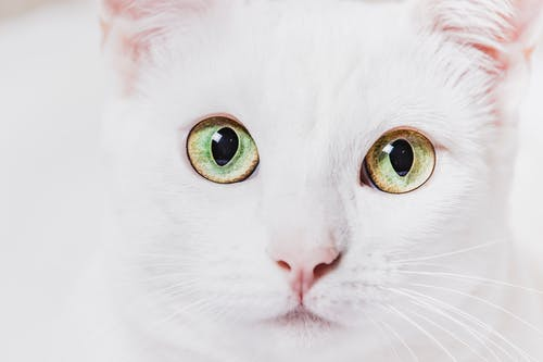 Yellow Cat Eye in Close Up Photography