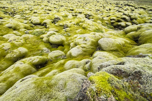 Free stock photo of iceland, nature, moss, wide