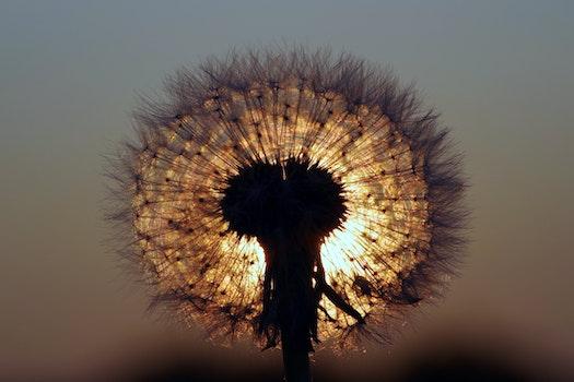 Free stock photo of light, nature, sun, plant