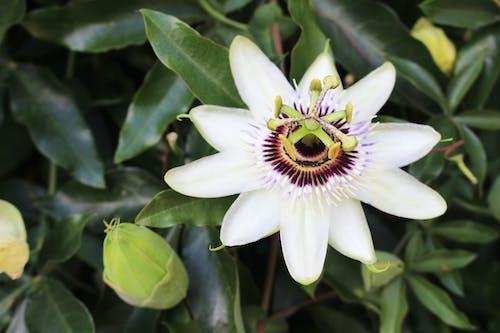 Foto profissional grátis de branco, broto, exótico, flor