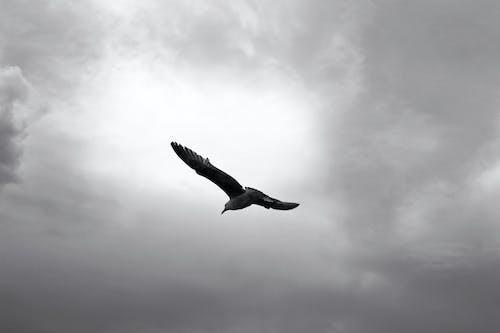 Foto profissional grátis de ave, céu, céu cinza, céu nublado