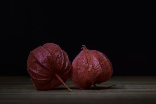 Бесплатное стоковое фото с вишня мочевого пузыря, декоративное растение, завод, китайские фонарики