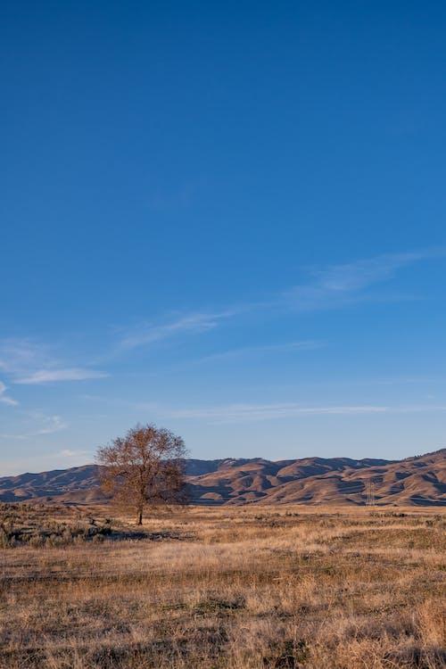 Scenery of thin leafless tree growing on dry grassy meadow near arid hills in savanna