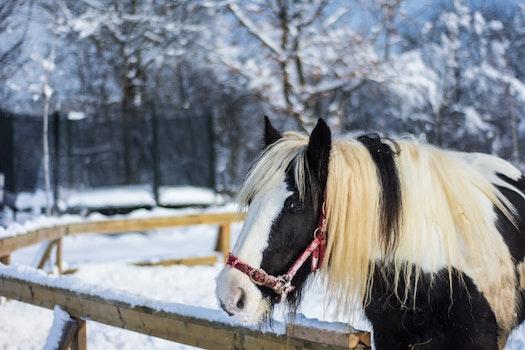 Free stock photo of cold, snow, winter, animal