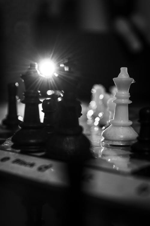 Free stock photo of against the light, back light, backlight, black and white