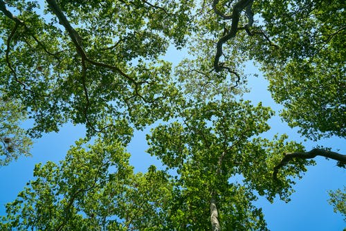 Kostnadsfri bild av blå himmel, ek, flora, fred