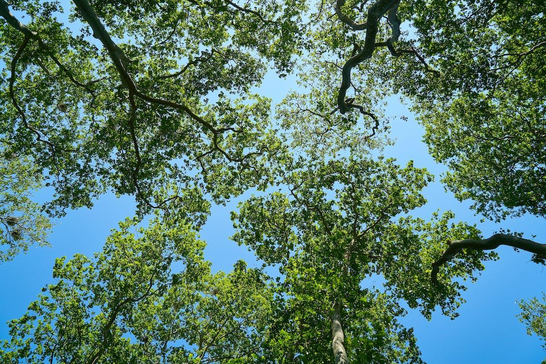 Green Tree Under Sky