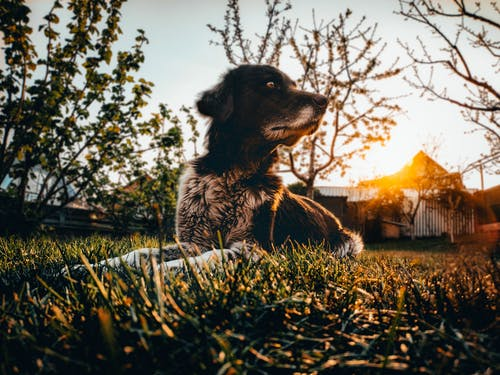 Calm dog sitting on green field in countryside during sundown