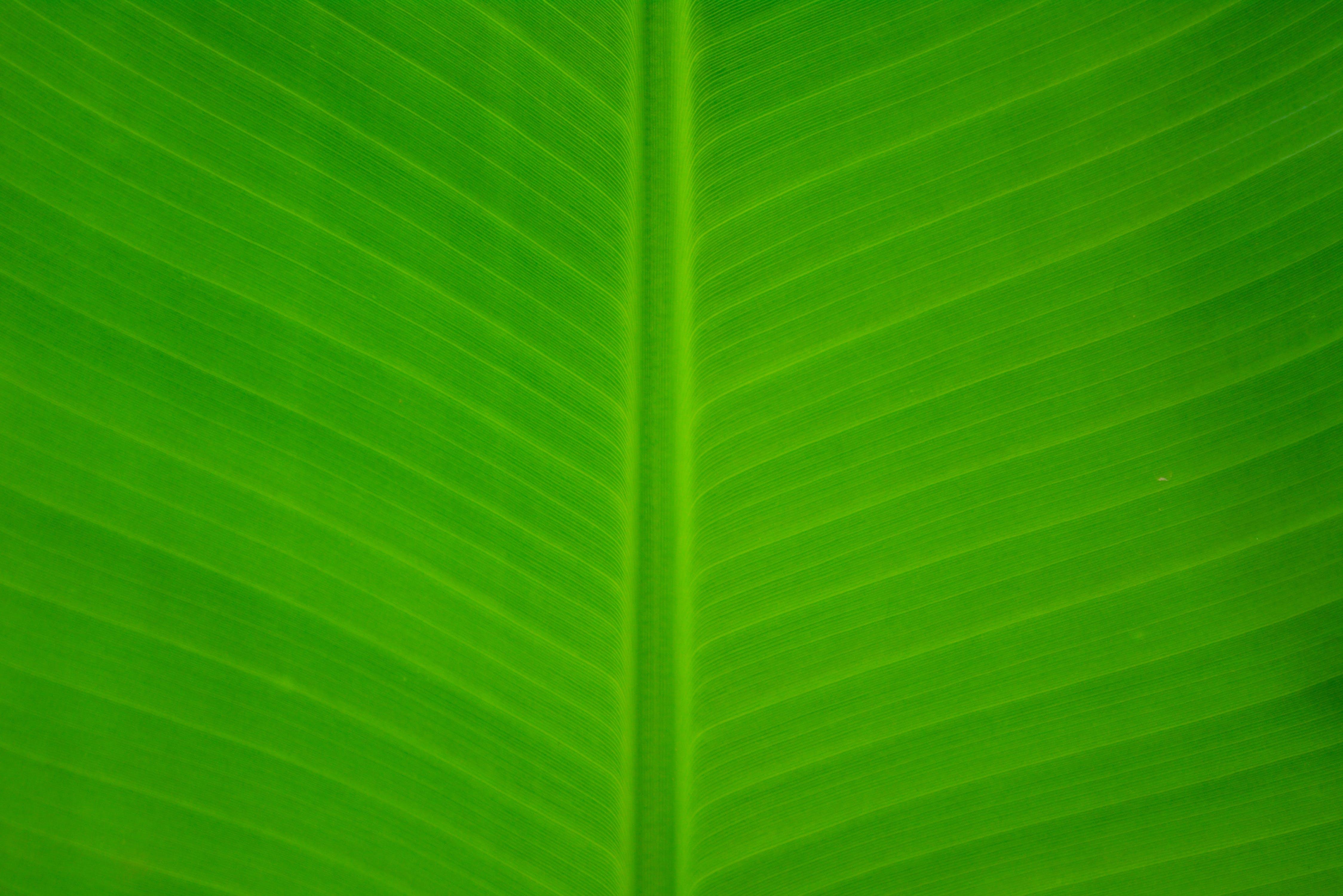 close-up, green, leaf