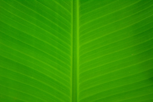 Kostenloses Stock Foto zu muster, pflanze, blatt, grün