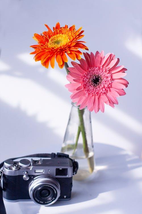 Retro camera with flowers in transparent vase
