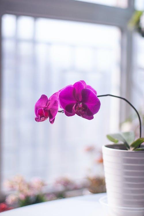 Kostenloses Stock Foto zu aroma, ast, blühen