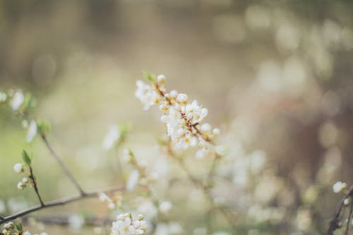 Thin twigs of wild plant with flowers