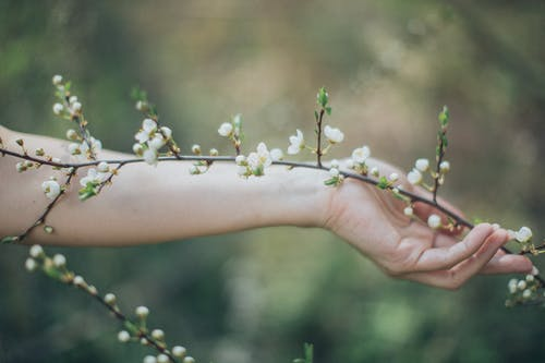 Crop person with blooming branch of plant