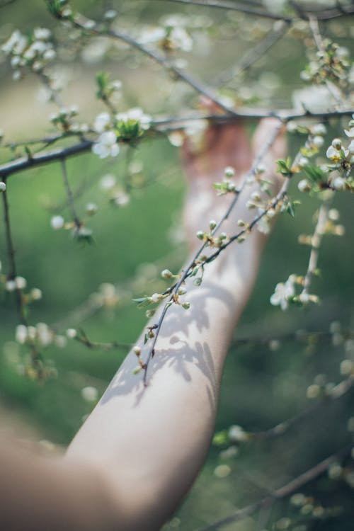 Green Leaves on Persons Arm