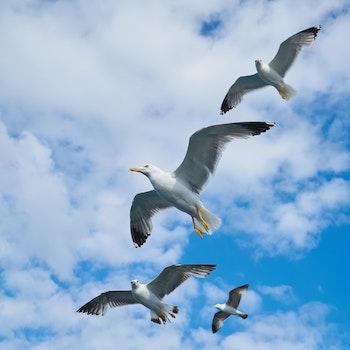 Free stock photo of sea, flight, flying, water