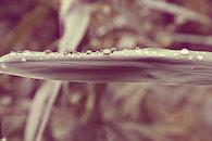 nature, water, garden