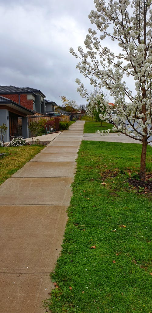 Free stock photo of footpath, melbourne, White tree