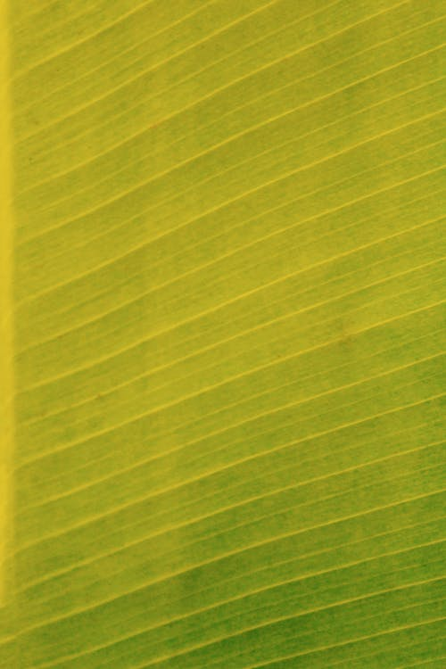 Kostenloses Stock Foto zu abstrakt, blatt, design, diagonale