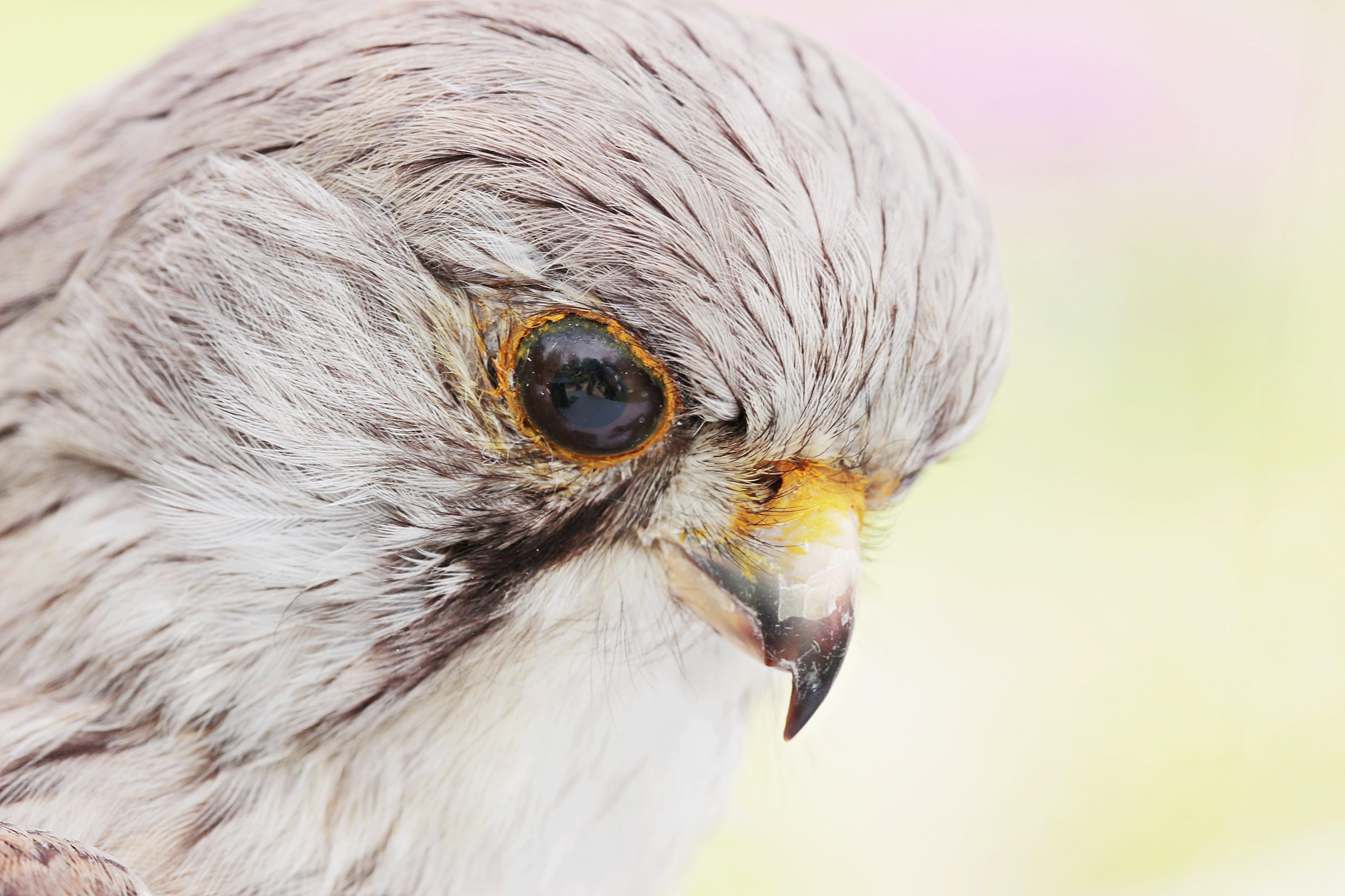 Free stock photo of animal, animal portrait, bird, bird of prey