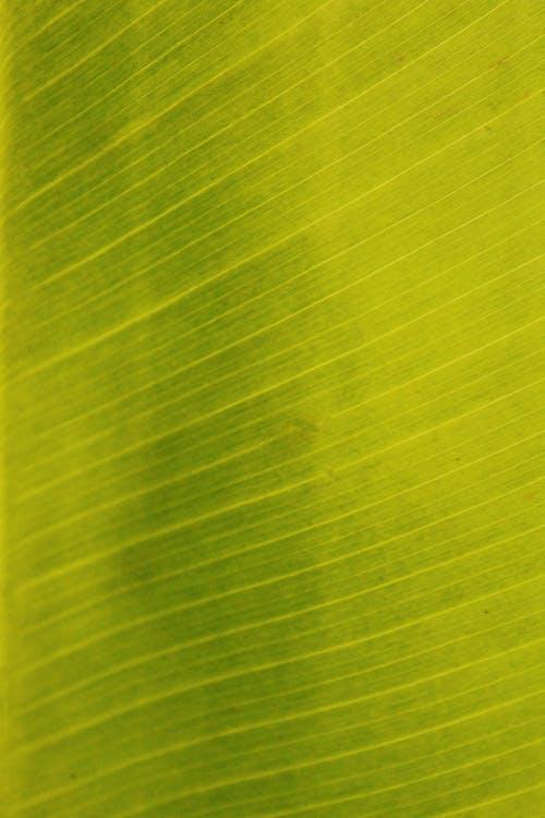 Ilmainen kuvapankkikuva tunnisteilla abstrakti, ekologia, kasvu, kuvio