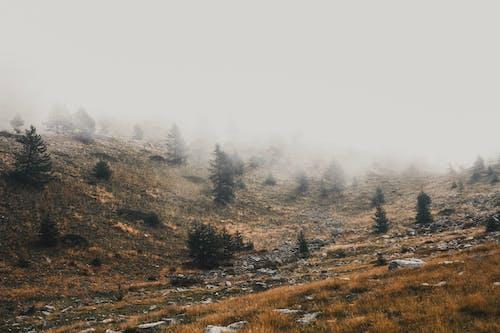 Hilly terrain on foggy day