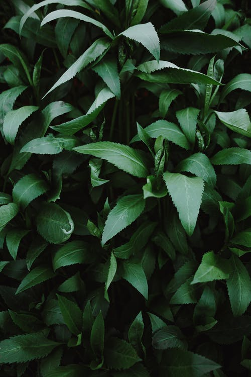 From above natural shrub with dark green leaves growing in park on summer day