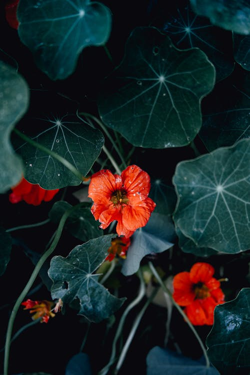 Green plants with red flowers