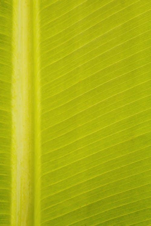 Základová fotografie zdarma na téma abstraktní, android tapety, banán, bujný