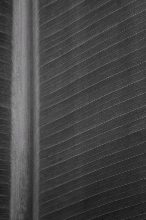 Kostenloses Stock Foto zu blatt, schwarze hintergrundbilder