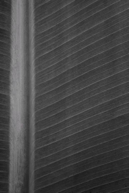 Základová fotografie zdarma na téma černá tapeta, list