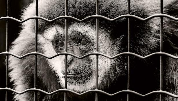 Free stock photo of animal, eyes, fur, head