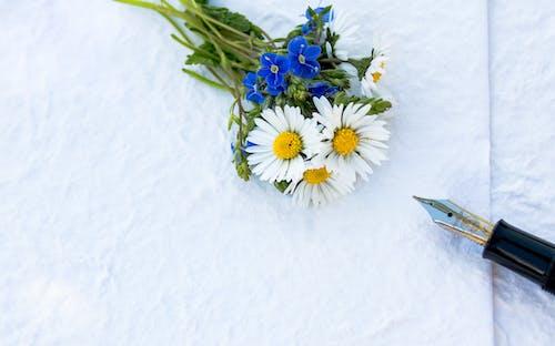 bitki örtüsü, buket, Çiçek açmak, çiçeklenmek içeren Ücretsiz stok fotoğraf