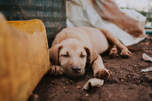 Dog sleeping near trash on street